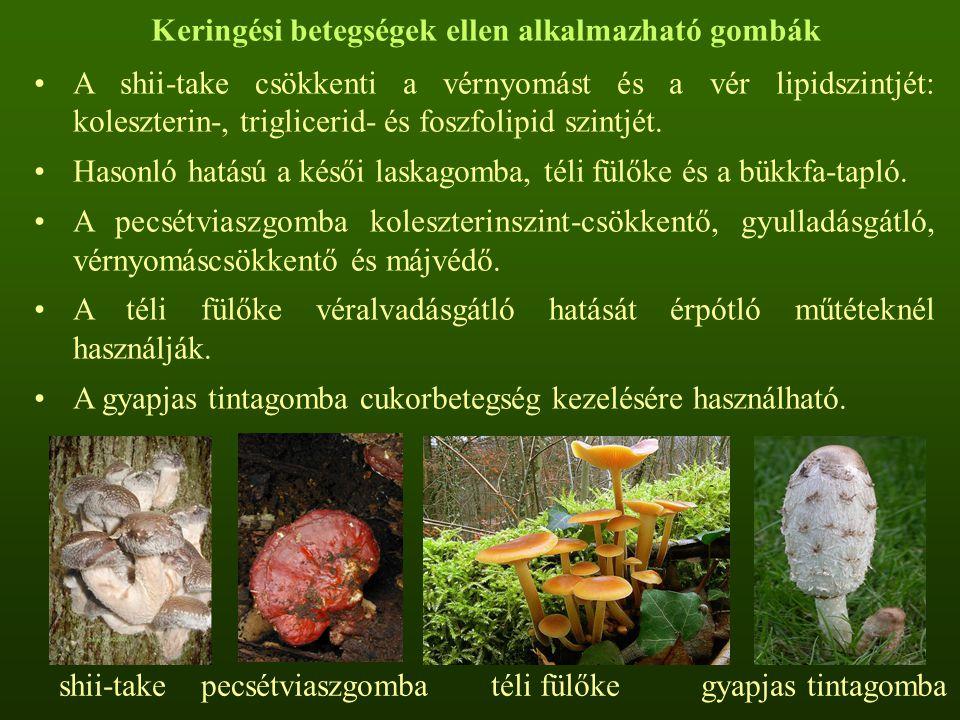 xilofág gombák pinwormák 3 éves gyermekeknél