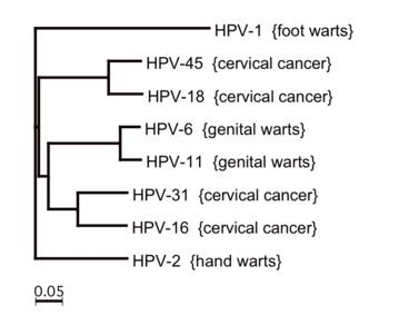 mik a szemölcsök és a polipok mandulagyulladás kezelése papilloma