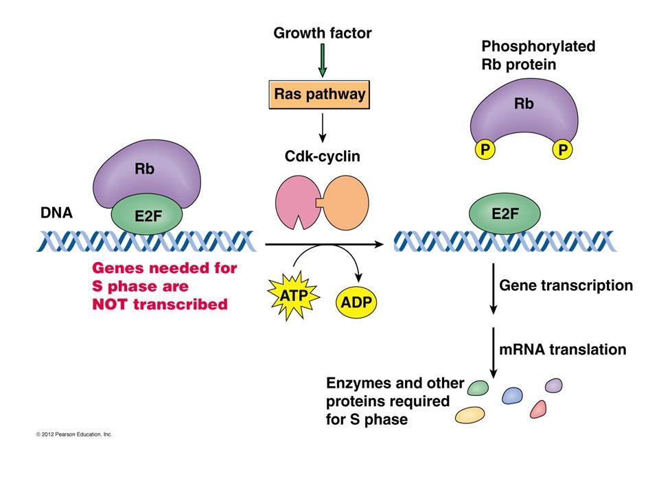hpv rák patogenezise ahol eltávolíthatják a papillómákat