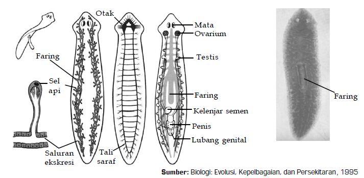 papilloma vírus és nyilvános fürdők