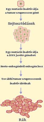 hashártya rák nincsenek tünetei vastagbélrák méregtelenítése szükséges