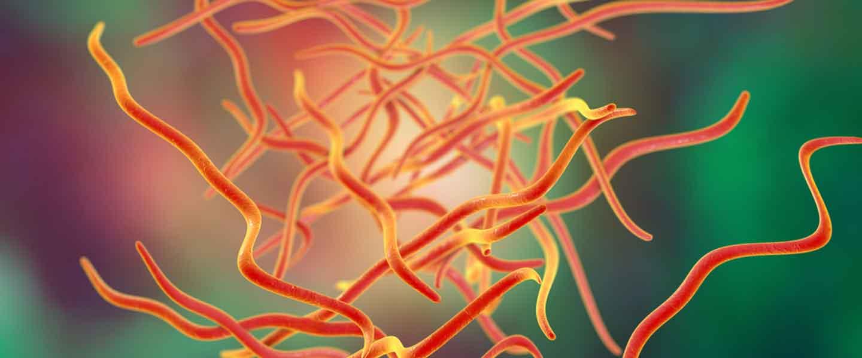 Áttekinti az enterobiasis kezelését gyermekeknél - Fertozo a belfergesseg
