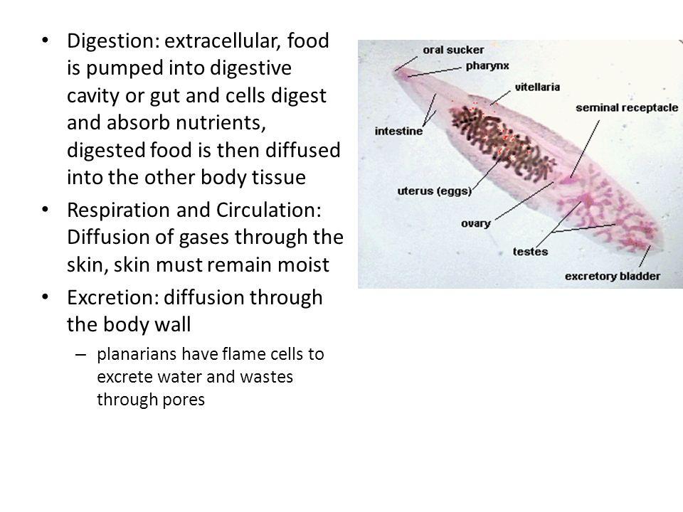 endometrium rák ppt