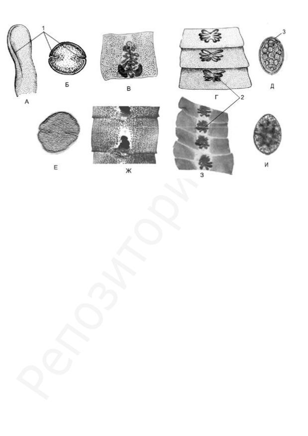 parazita botok