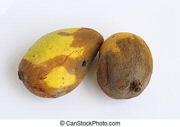 féreg mangó