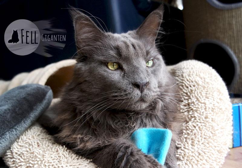 giardien bei katzen bekampfen