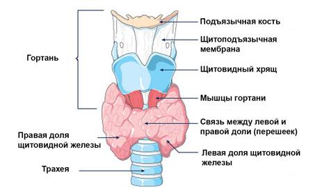 gégerák tünetei és kezelési módszerei