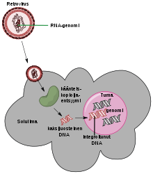 nem onkogén szemölcsök giardia uk tünetei