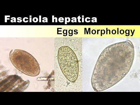 ökológiai fascioliasis metasztatikus genetikai rák