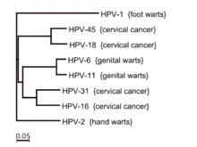 emberi papillomavírus elleni vakcina oka a féregkészítmények neve