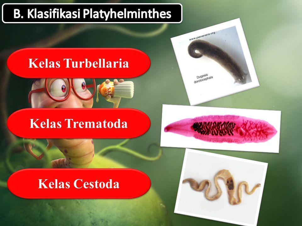 Neodermata platyhelminthes - Platyhelminthes kelas cestoda