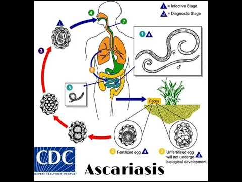 enterobiosis a barikádon papillómáktól és parazitáktól