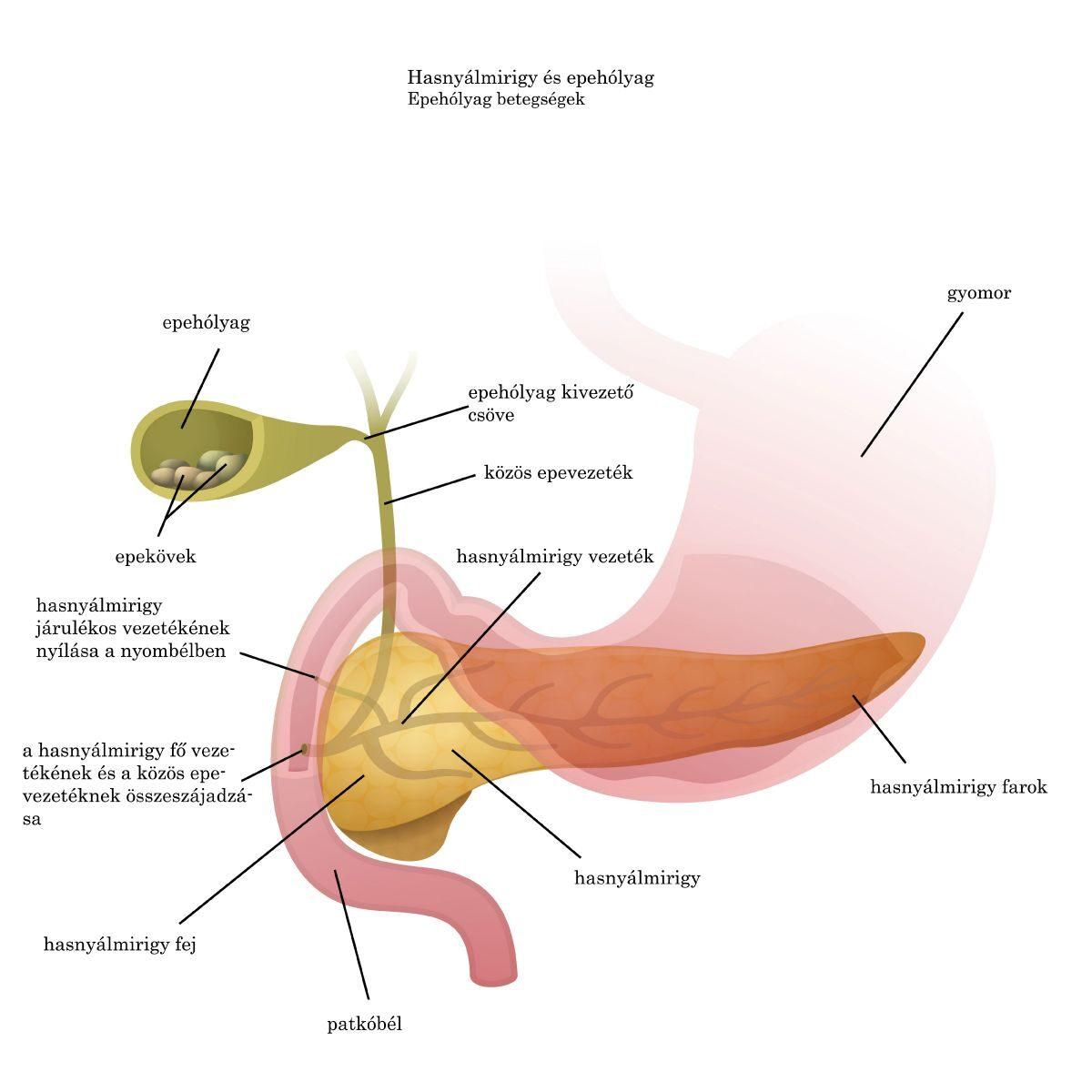emberi papillomavírus terhesség után