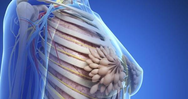 az emberi testben található paraziták gyógyszeres tabletták