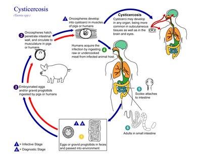 a legszörnyűbb paraziták peritoneális petefészekrák