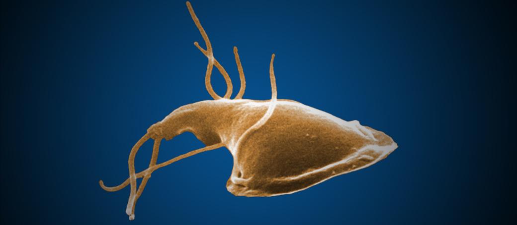 paraziták psa priznaky-ban emberi papilloma gége