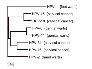 hpv kezelés montreal