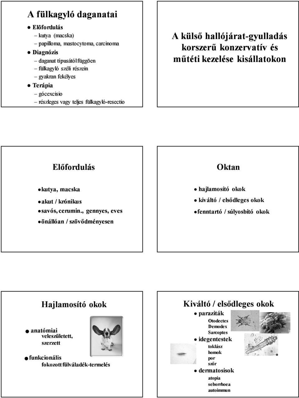paraziták morgellons betegség