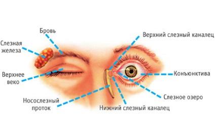 szemek folynak a férgektől)