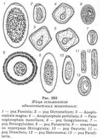 enterobiasis a klinikán a rossz lehelet segít