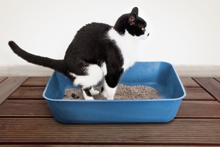 Műtét előtti tudnivalók, Hogyan lehet férgeket hozni egy macskához