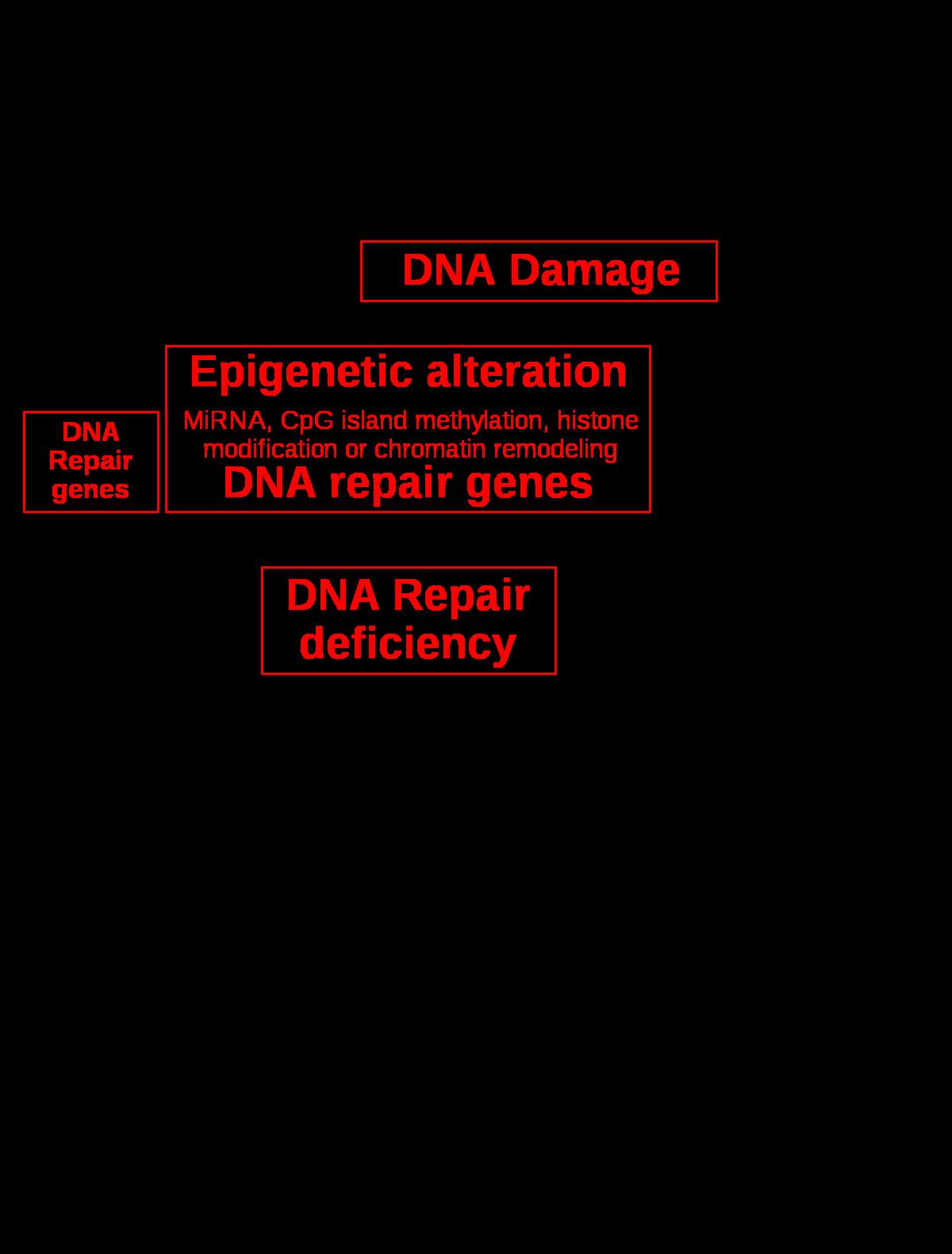 papilloma vírus laphám paraziták és tijelu slike