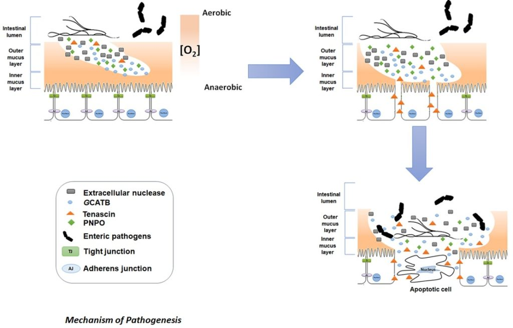 étrendi giardiasis menü papillomavírus definíció larousse