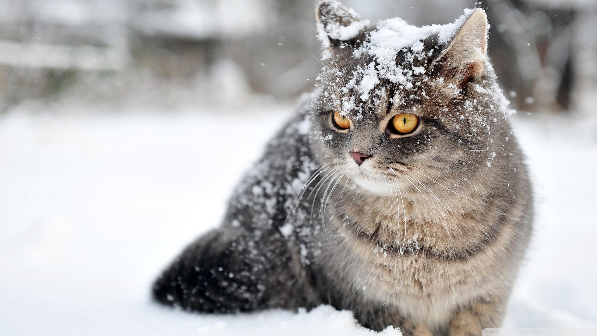 vigyázz a macskákra